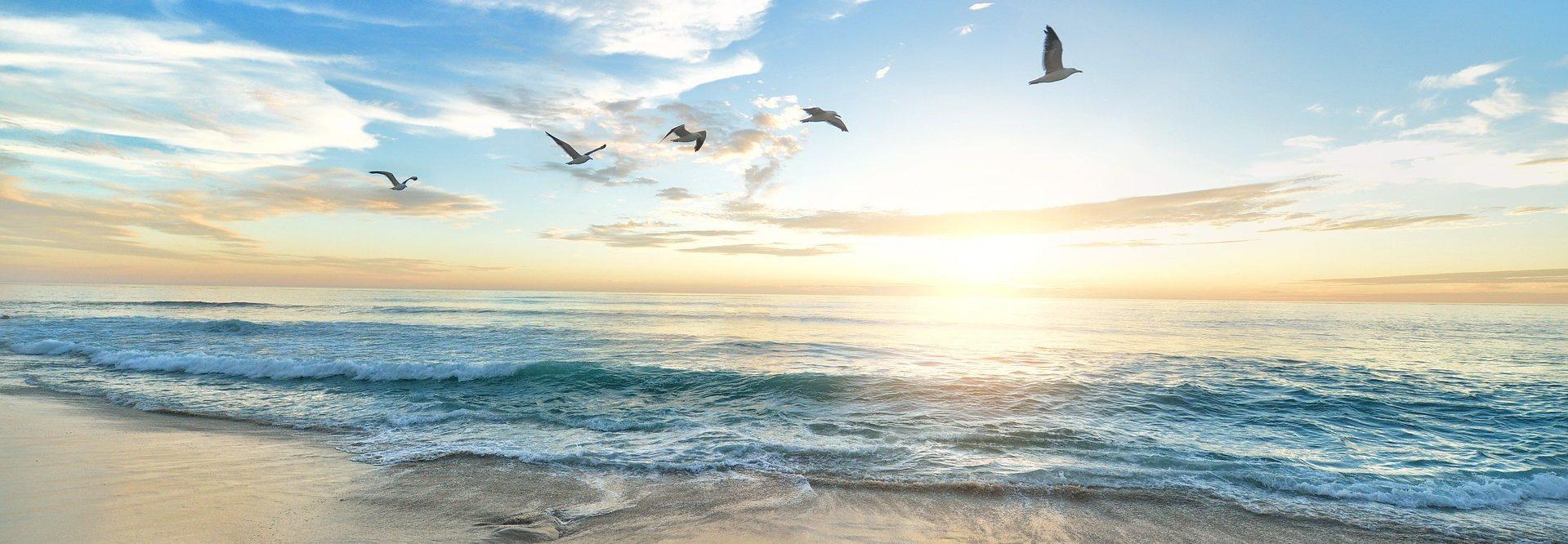 Beach Sunrise with Birds